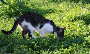 W Legnicy sterylizują dziko żyjące koty
